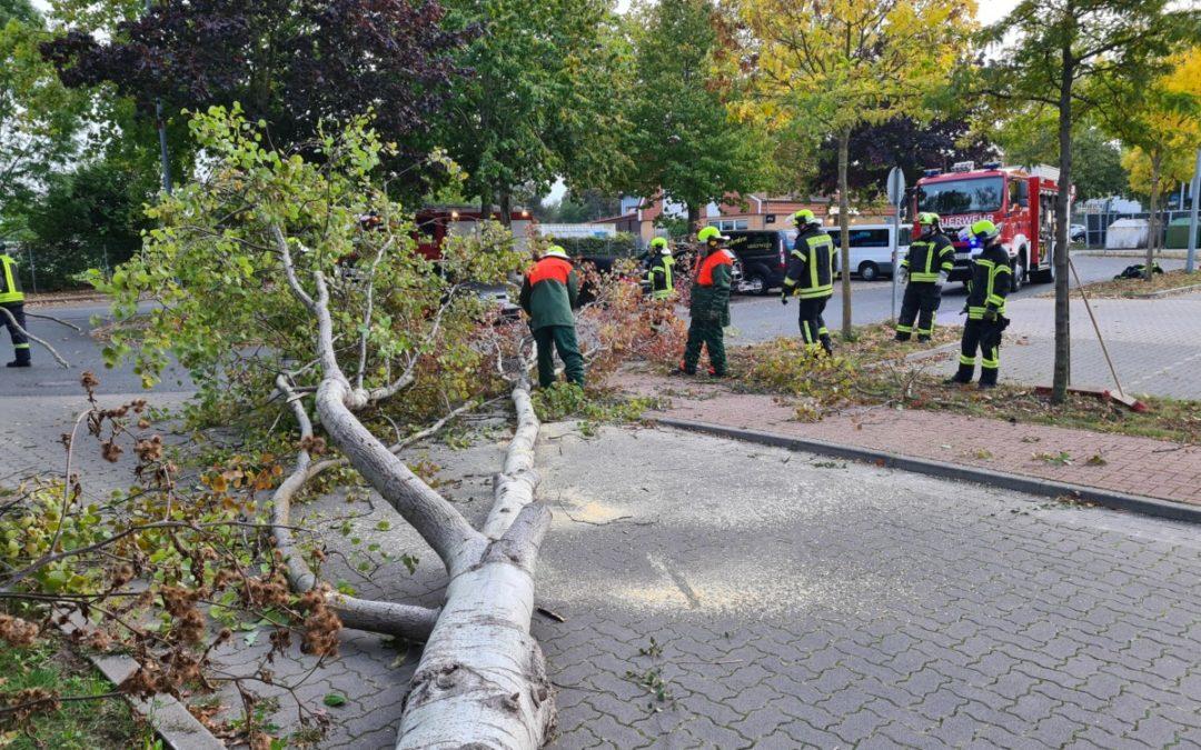 Hilfeleistung – umgestürzter Baum