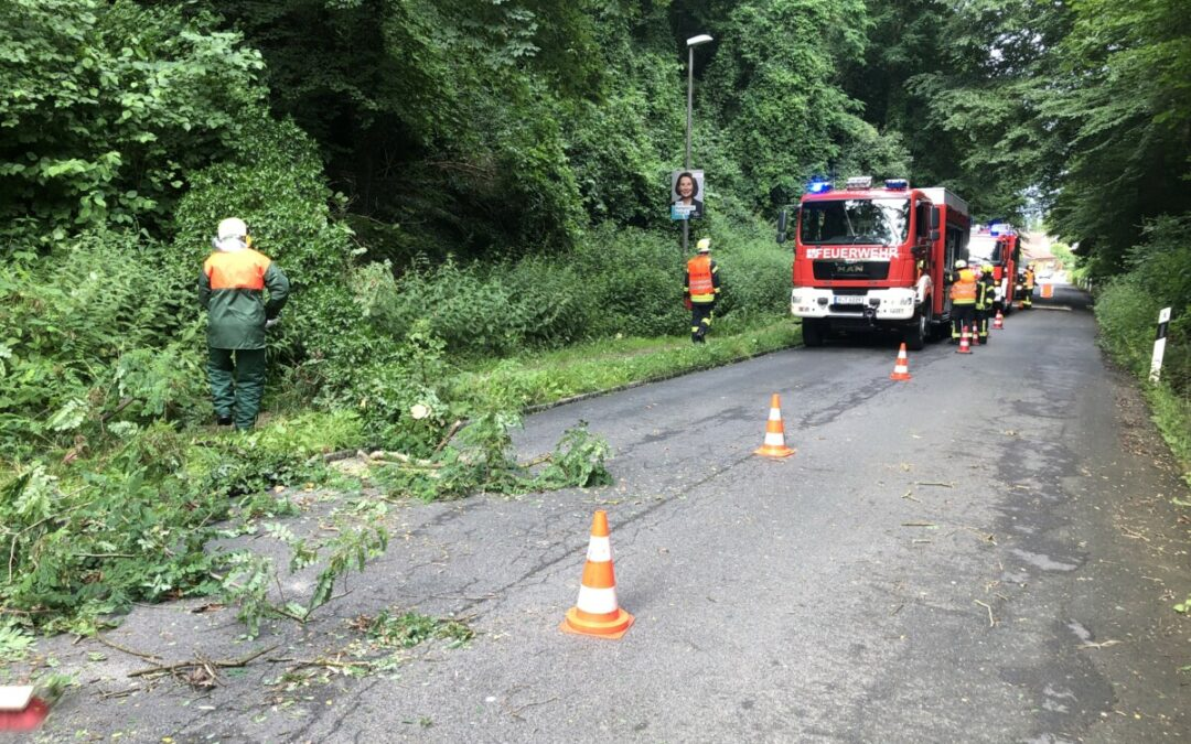 Hilfeleistung – Baum auf Straße